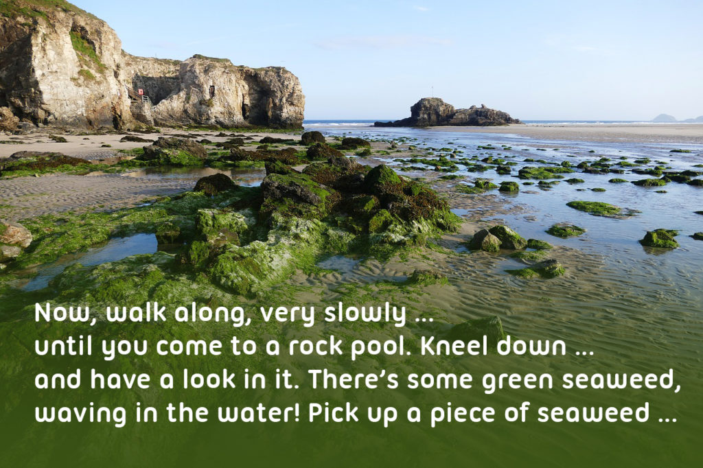 destination for a school trip Cornish beach with rock pools and lots of sand. Text reading ''Now, walk along, very slowly … until you come to a rock pool. Kneel down … and have a look in it. There's some green seaweed, waving in the water! Pick up a piece of seaweed … give it a shake to get the water off …'